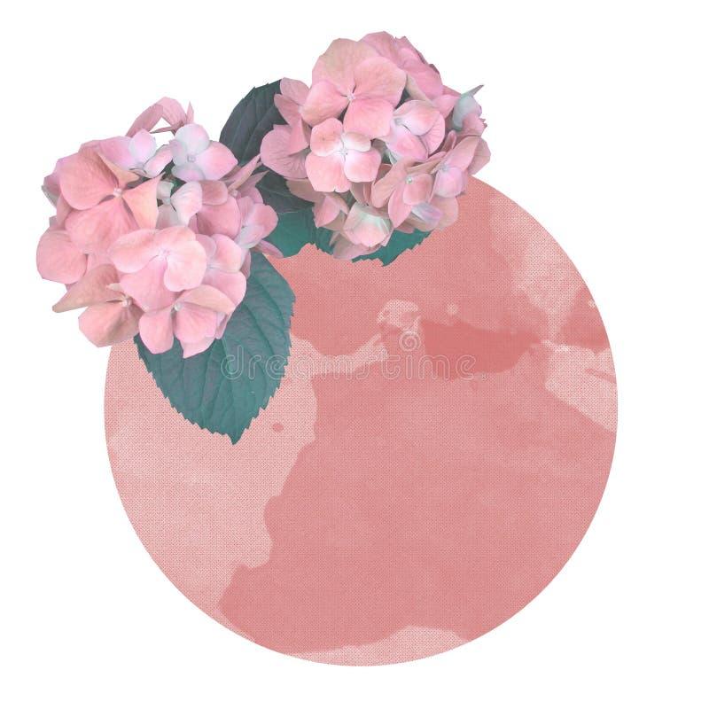 珊瑚颜色圈子在白色背景的 免版税库存图片