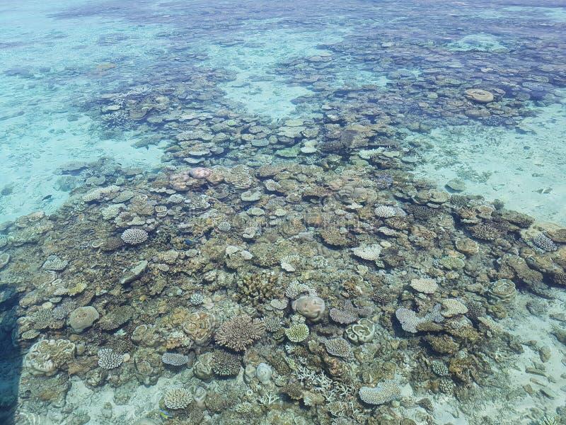 珊瑚马尔代夫礁石 免版税库存图片