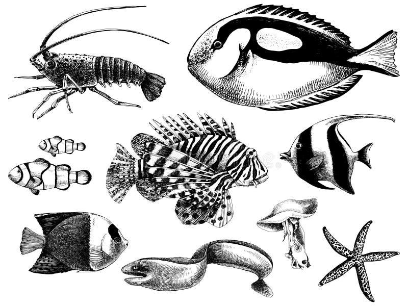 珊瑚鱼收藏 皇族释放例证