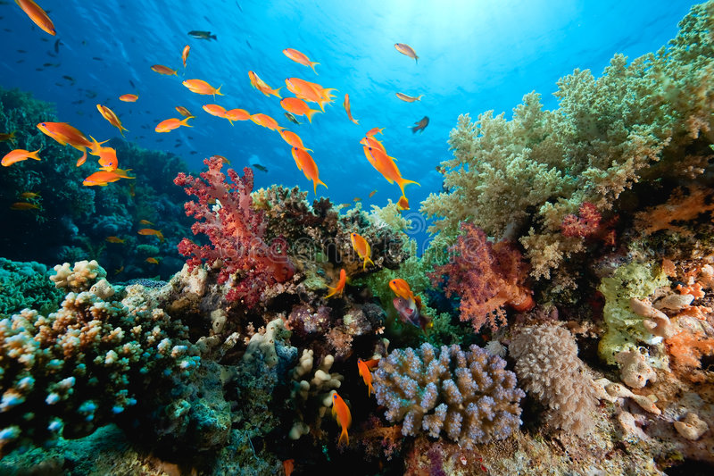 珊瑚鱼海洋 免版税库存照片