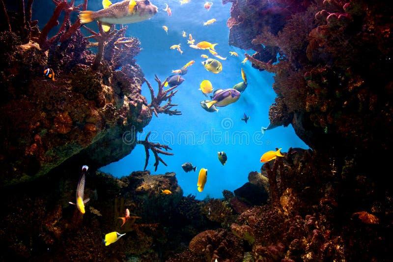 珊瑚鱼礁石水下的视图 免版税库存照片
