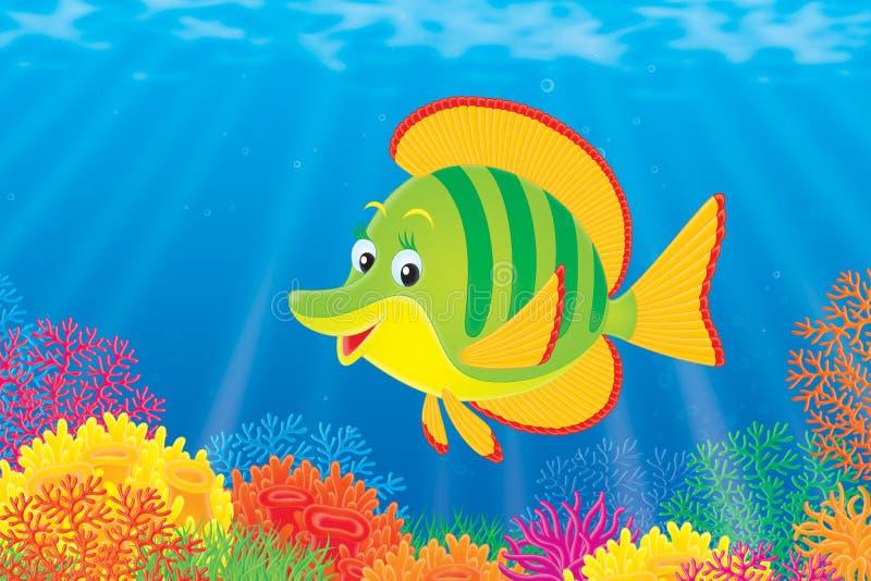 珊瑚鱼 皇族释放例证