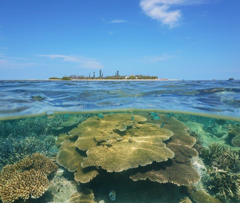 珊瑚水中分裂谬传小岛新喀里多尼亚 免版税库存图片