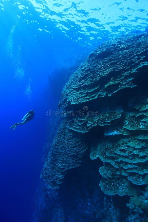 珊瑚结构在红海 免版税库存照片
