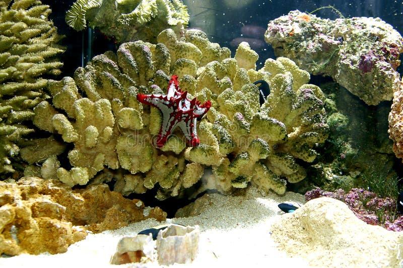 珊瑚 库存图片