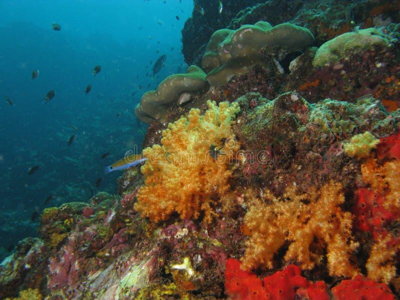 珊瑚ha ko礁石泰国 免版税库存照片
