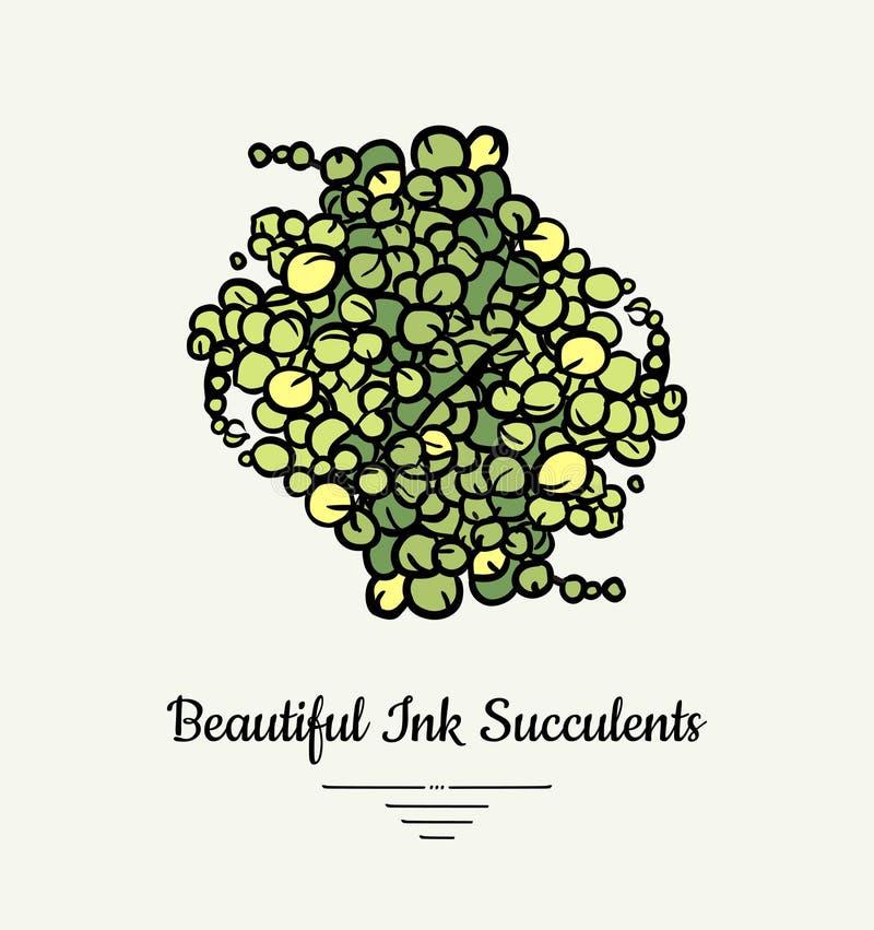 珍珠千里光手拉的多汁传染媒介被隔绝的例证串  现代美丽的墨水多汁植物商标,象, 库存例证