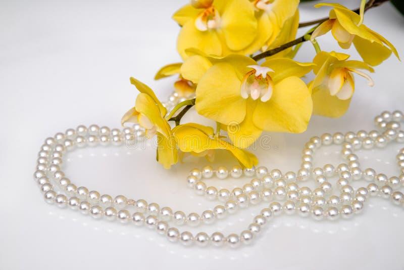 珍珠和黄色兰花 免版税图库摄影