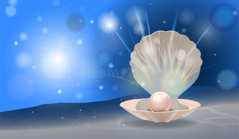 珍珠壳 库存例证