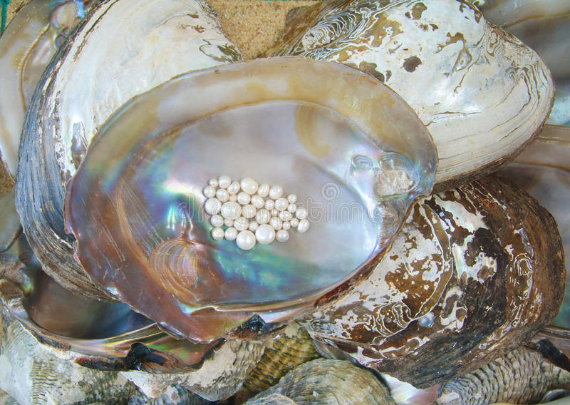 珍珠用牡蛎 免版税库存照片