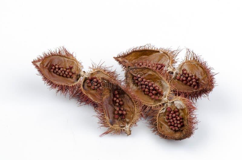 绛珠子树(Bixa orellana L.)。 免版税库存照片