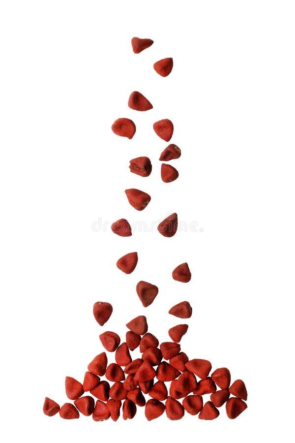 绛珠子种子 免版税库存照片