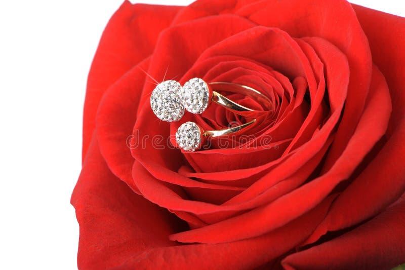珠宝红色环形上升了 图库摄影