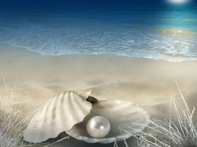 珠色壳被月光照亮海滩背景 免版税库存照片