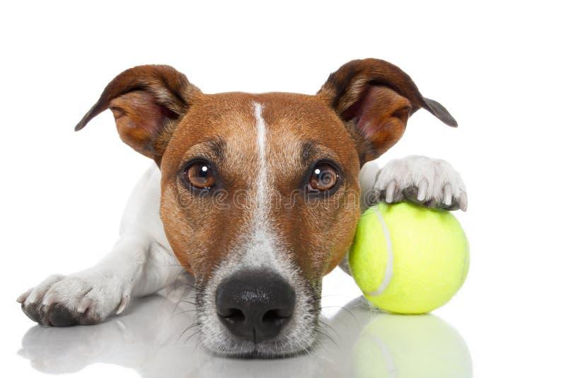 球狗网球 库存照片