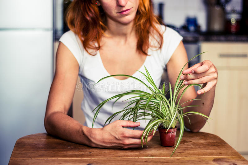 整理她的植物的妇女 库存图片
