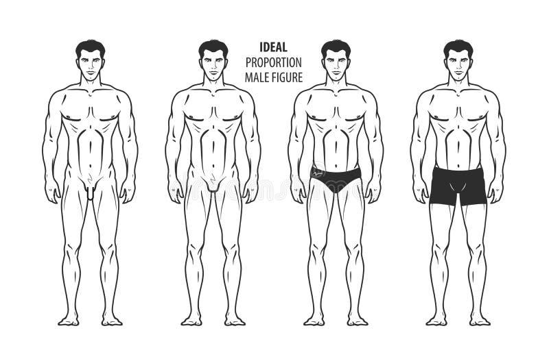 理想的比例,男性图 充分的成长的手拉的概述人,人 也corel凹道例证向量 向量例证