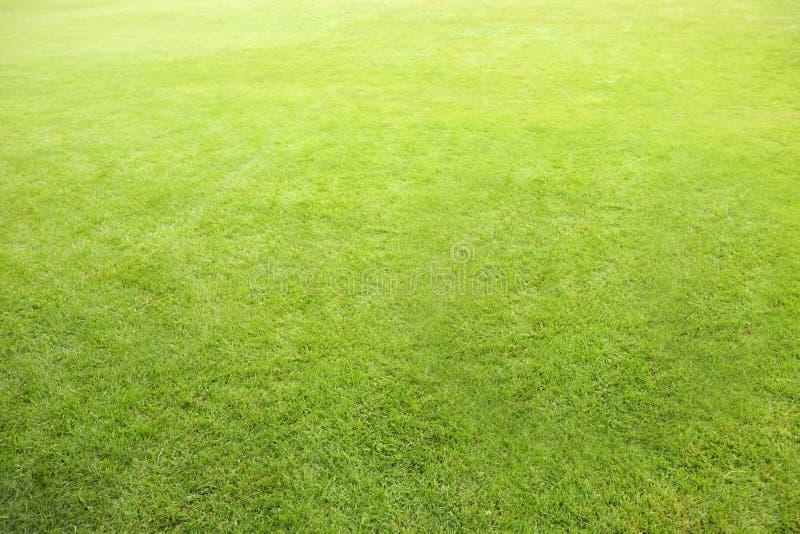 理想背景的草坪 库存图片