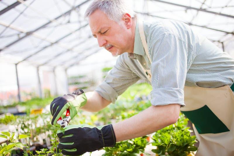 整理植物的花匠 免版税库存照片