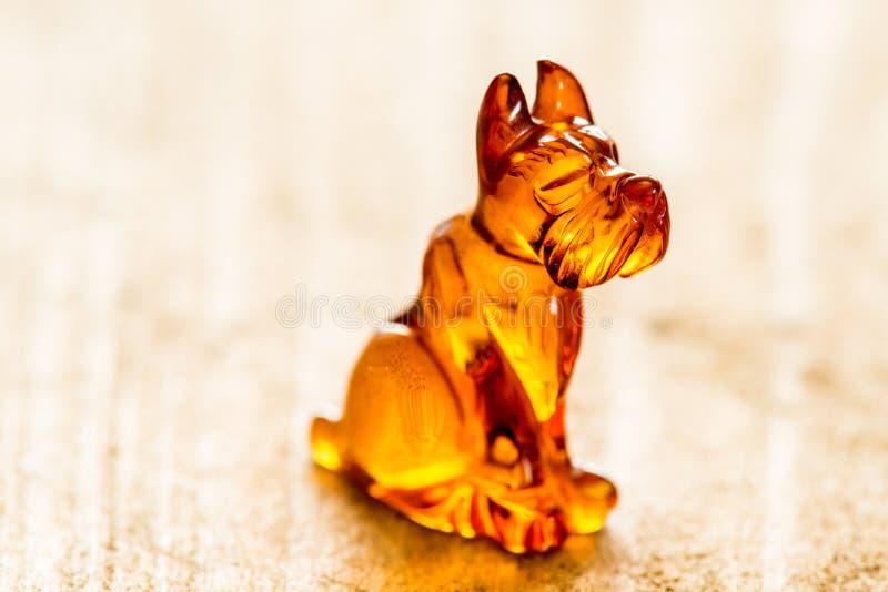 琥珀色的狗,特写镜头 免版税库存照片
