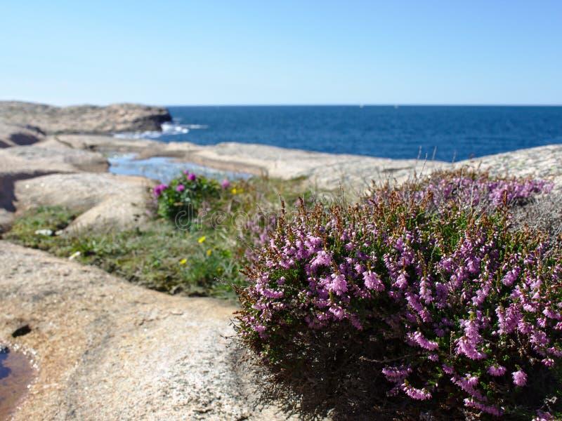 瑞典人西海岸 免版税库存照片