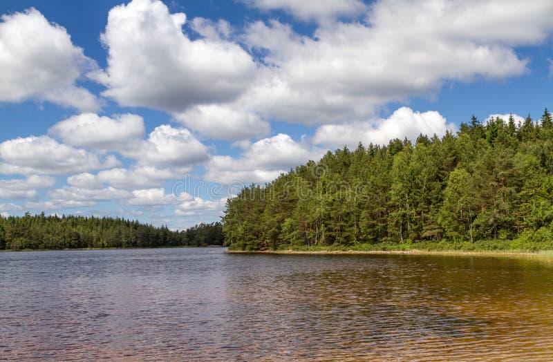 瑞典的南部的一个小森林湖 库存图片