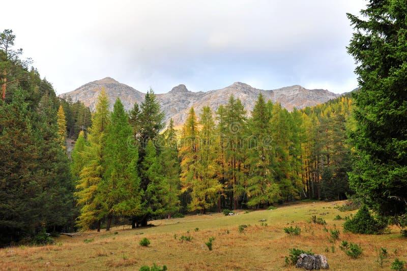 瑞士国家公园温带林  库存图片