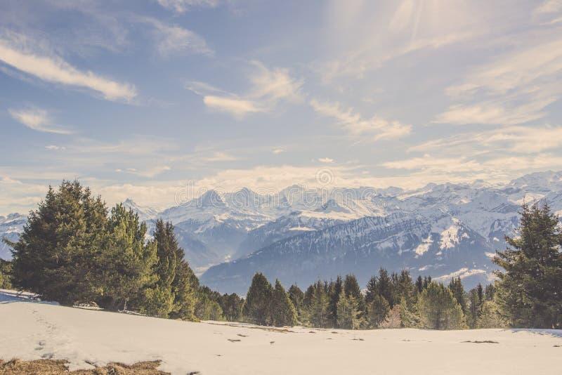 瑞士阿尔卑斯mountai全景视图在与森林和蓝天的冬天 免版税库存照片