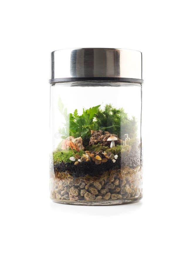 玻璃容器植物微型庭院 库存图片