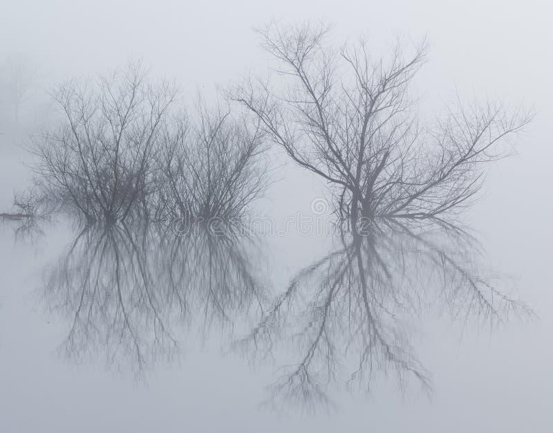 玻璃湖的有雾的反射性海岛 库存照片