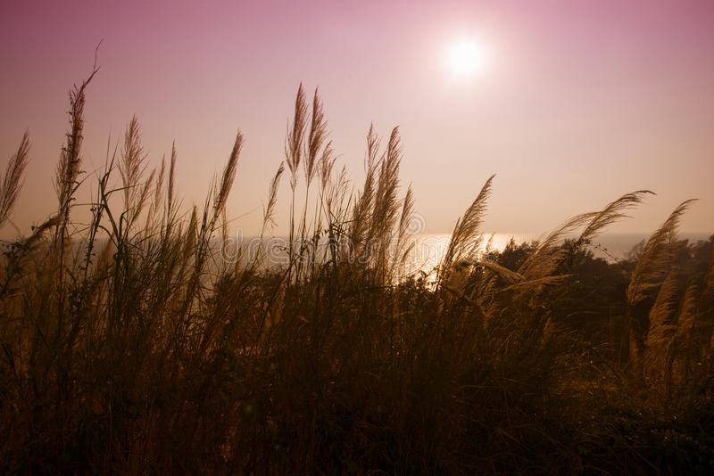 玻璃花和太阳自然本底 免版税图库摄影