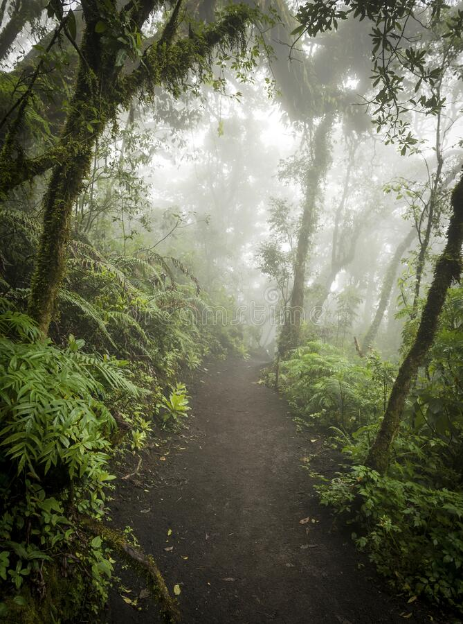 瓜地马拉丛林小径景观 库存图片