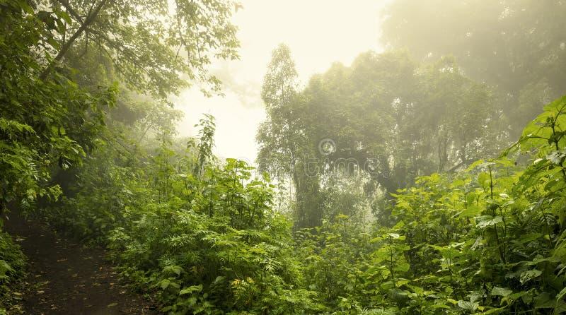 瓜地马拉丛林景观 免版税库存照片