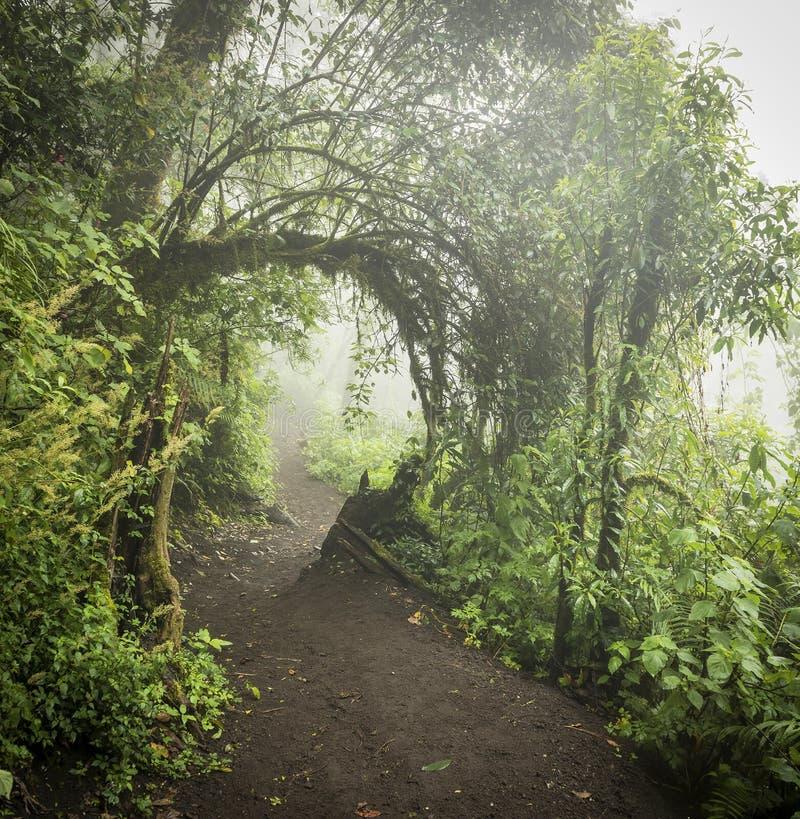 瓜地马拉丛林景观 库存照片