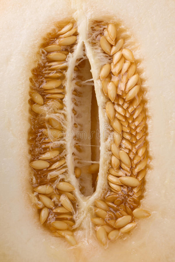 瓜种子的一张宏观图片 甜甜瓜甘露 新鲜,成熟,未加工和甜瓜 淡黄色甜瓜背景 库存图片