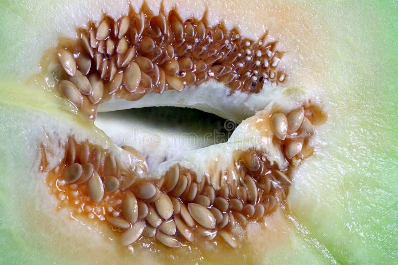 瓜种子 免版税库存照片