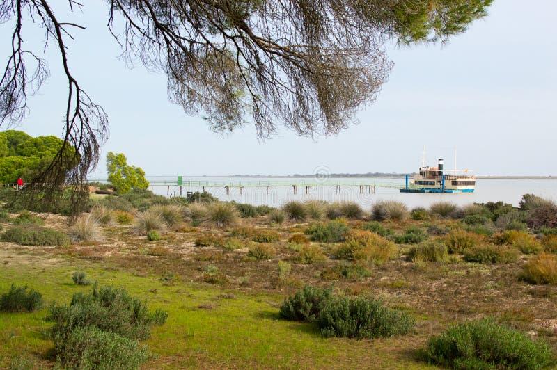 瓜达尔基维尔河的银行在Doñana国家公园 库存图片