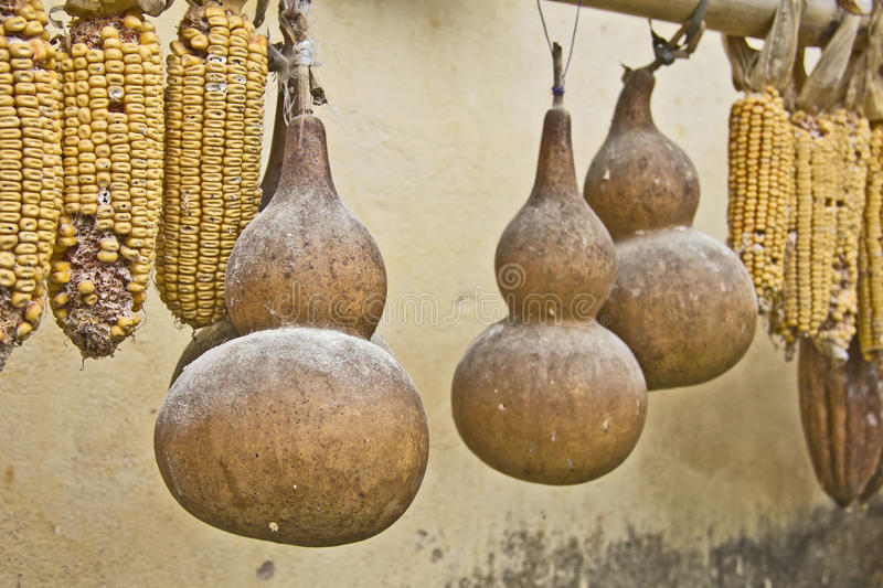 瓢和玉米 库存照片