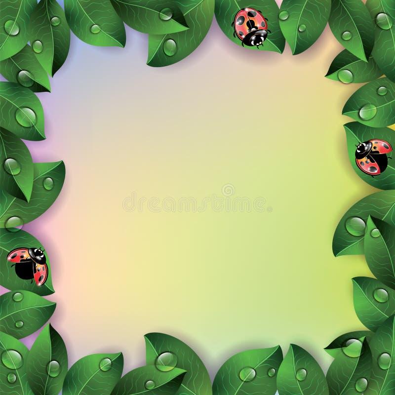 瓢虫和叶子在五颜六色的背景 皇族释放例证