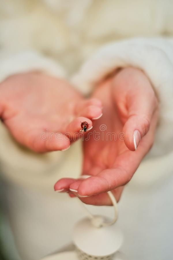 瓢虫坐女孩的手指白色外套 库存图片