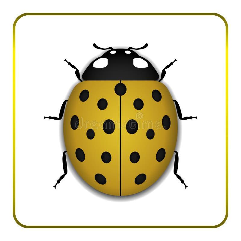 瓢虫黄色现实动画片象 库存例证