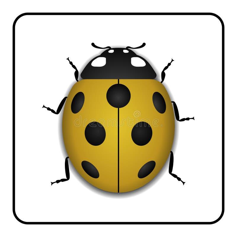 瓢虫黄色现实动画片象 皇族释放例证