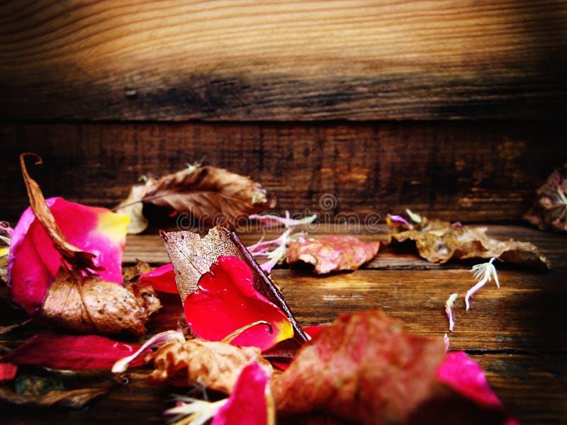 瓣上升了 秋叶 苹果秋天对光检查袋装花瓶的构成干燥叶子 在木纹理 免版税图库摄影