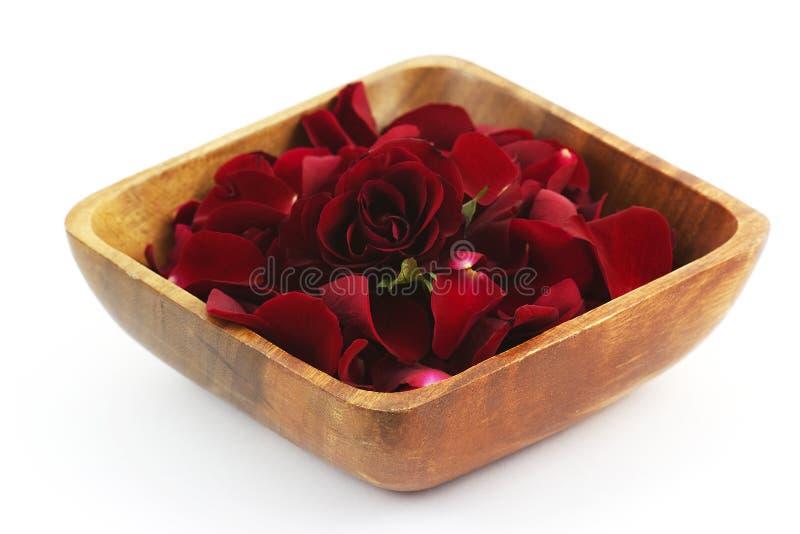 瓣玫瑰色温泉 图库摄影