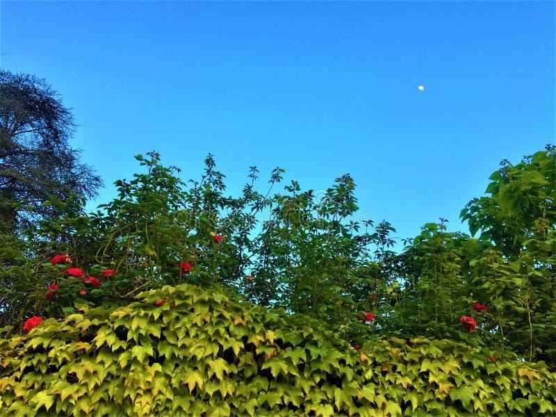 瓦伦蒂诺公园、月光和玫瑰在都灵市,意大利 图库摄影