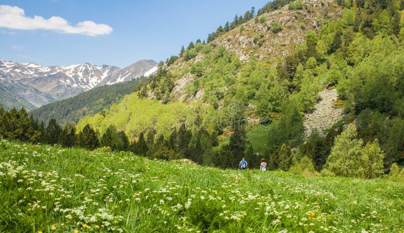 瓦勒de Sorteny自然公园安道尔比利牛斯 免版税库存图片