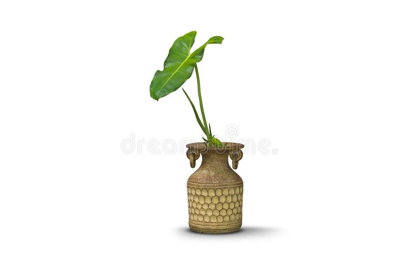瓦器在白色隔绝的黏土花瓶的绿色植物 免版税库存照片