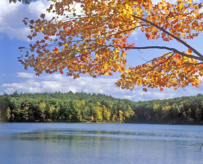 瓦尔登湖池塘,马萨诸塞 库存图片