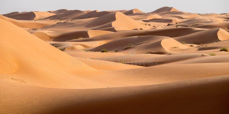 瓦希巴沙子,阿曼沙漠,日落的 库存照片