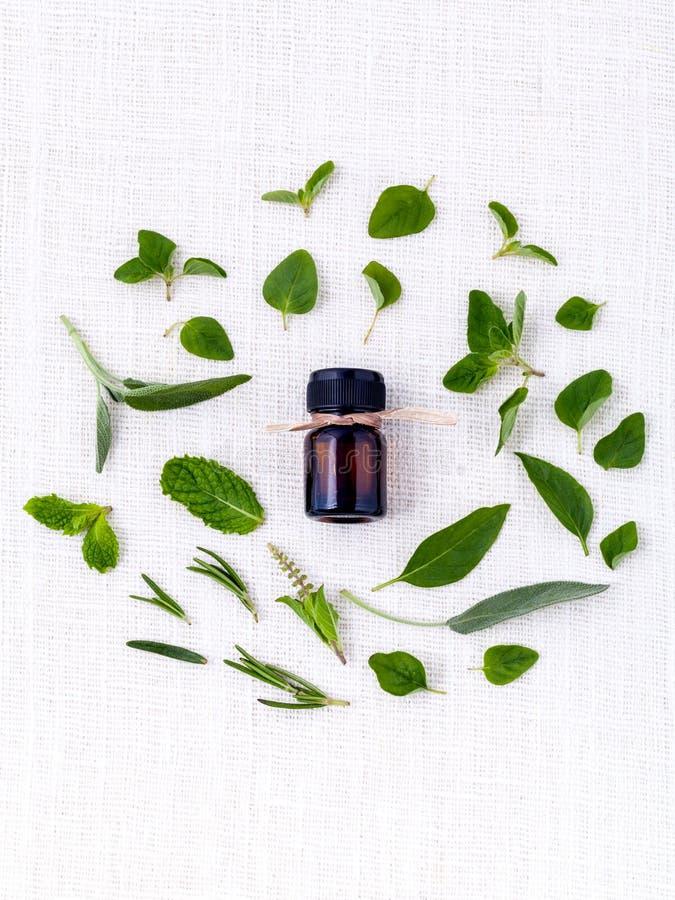 瓶与草本圣洁蓬蒿叶子,迷迭香, oreg的精油 免版税库存照片